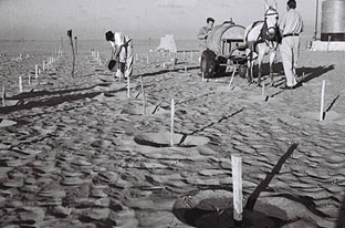 Kibbutzniks planting trees at Kibbutz Beeri in the Negev Desert, 1947