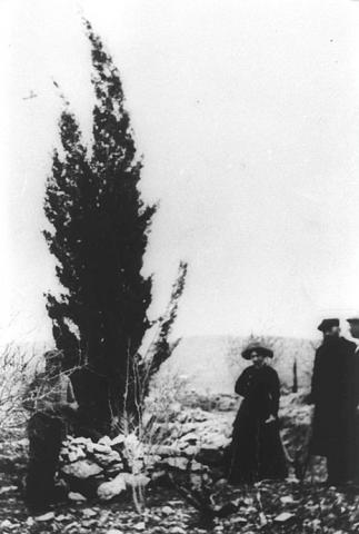 Theodor Herzl planted a cypress tree, 1898. Photo Trees of the Holy Land.